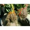 苗木运输保湿剂
