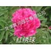 红绣球芍药