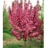花卉种子,树桩盆景,名优桂花,各种竹子 承接各种绿化工程