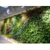 广州市锦润园林仿真植物墙款式