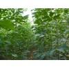各种籽播扦插小苗,各种花卉种子,树桩盆景,名优桂花,各种竹子