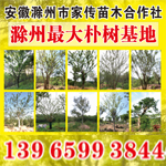 安徽滁州市家传苗木合作社