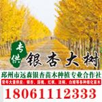 邳州市远森银杏苗木种植专业合作社