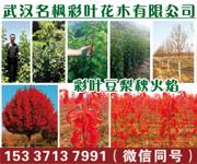 武汉名枫彩叶花木有限公司