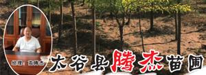 山西省太谷县腾杰苗圃基地
