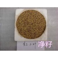 白花三叶草种子 红三叶草籽 进口种子批发 工程绿化三叶草种子