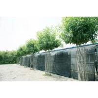 白蜡中国结造型树