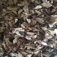 东北耐寒 三角枫种子北方安全越冬 三角枫种子 发芽率高