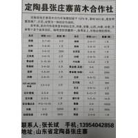 定陶县张庄寨苗木合作社供应国槐3-20公分5万棵
