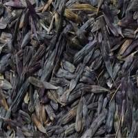 特价供应板蓝根种子 抗病高产 天邦草业板蓝根种子供应 板蓝根