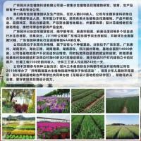 供应水生植物,水生植物造景专用植物供应 广东懿兴水生植物