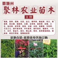 菖蒲种植基地 野草莓批发价格 品种全 优质可靠 湖北聚林农业