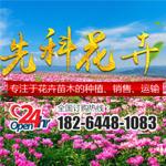 青州市先科花卉苗木专业合作社