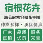 台安县城美耐寒花卉苗木基地