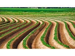 2021年农田5不准:违规罚上万,关系户都没用!