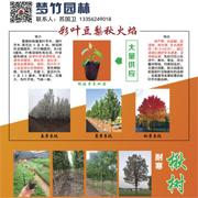 山东梦竹园林绿化工程有限公司
