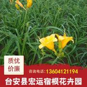 台安县宏运宿根花卉园