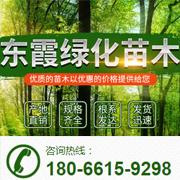 江苏盐城东台东霞苗木有限公司