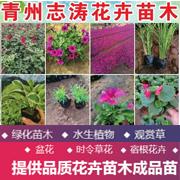 青州志涛花卉苗木种植专业合作社