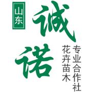 青州市诚诺花卉苗木合作社