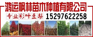 河北衡水鸿运枫林苗木种植有限公司