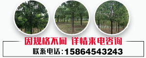 济宁市兖州区光华苗木合作社