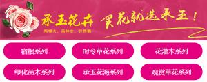 青州市承玉花卉苗木种植专业合作社