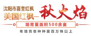 沈阳市喜奎红枫苗木种植专业合作社