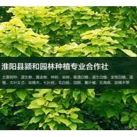 求购山楂树苗春节后用,要求地径5公分以上