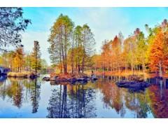 世界十大最耐水的树,全球耐涝树种盘点!