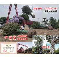 中国结造型树@白蜡造型树@海棠造型树@大型造型树@明烁农林