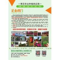 青州草花专供@花海设计打造@绿雕灯光造型@潍坊众邦园林绿化