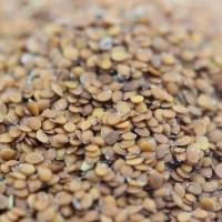 香雪球种子批发 香雪球种子价格 优质牧草物美价廉 万花谷生态