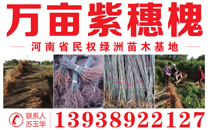 河南省民权绿洲苗木基地