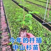 江苏省东台市杉缘园林科技有限公司