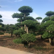 武汉春禾园林绿化工程有限公司