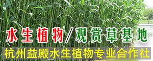 杭州益殿水生植物专业合作社