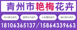 青州艳梅花卉苗木种植专业合作社