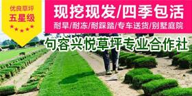 容市兴悦草坪专业合作社