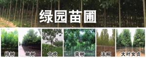 太康县绿园苗圃