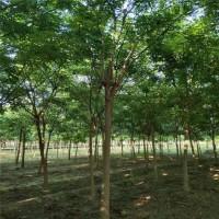 求购河北唐山附近清地处理的8-9-10公分的国槐树