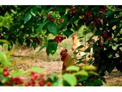 国家林业和草原局办公室关于开展第五批国家林下经济示范基地认定工作的通知