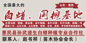 惠民县孙武速生白蜡种植专业合作社