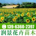 青州市润景花卉苗木有限公司