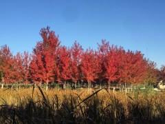 国家林草局将从五方面推进国家公园建设,必将带动对这些苗木的大量需求!